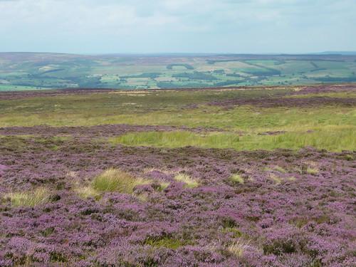 Moor & heath