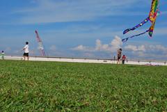 DSC_0238 (matzhuang) Tags: sun grass marinabarrage