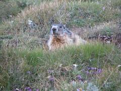 IMG_7189 (Mik_hiker) Tags: grossglockner hohetauern tauern fuscherkarkopf