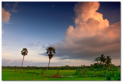couple (Soumya Bandyopadhyay) Tags: trees sunset colors field clouds rural landscape paddy wide westbengal gradnd pentaxk200d pentax1855mmii