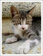 sweet,tiny,baby.... (sevgi_durmaz) Tags: baby animals cat mom sweet homeless tiny lovely streetcat platinumheartaward