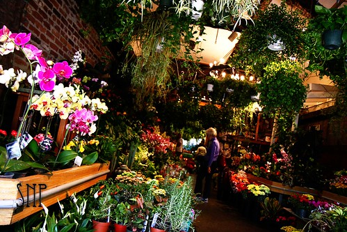 . flower shop near harvard .