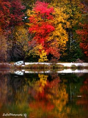 Autumn Reflections (socalgal_64) Tags: autumn fall reflections water lake boat trees colorful colors poconos mountains woods pennsylvania pa usa snow snowfall seasonal nature natural landscape waterscape picturesque scenic anawesomeshot theunforgettablepictures worldwidelandscapes topshots goldendiamondblog colorphotoaward artistoftheyearlevel5 artistoftheyearlevel4 artistoftheyearlevel3 carolynlandi coth5