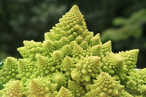 abstract food fractal Romanesco vegetables green Alimentacao