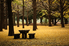 Table and Bench (mrhayata) Tags: park autumn tree leaves japan bench table geotagged tokyo blog ginkgo shibuya harajuku yoyogi mrhayata geo:lat=35670132 geo:lon=139697221