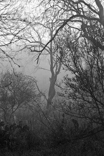 Morning Mist - 167/365 -22 November 2009
