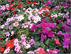 Alegra del hogar. (Crisfer) Tags: flores multicolor flawers crisfer