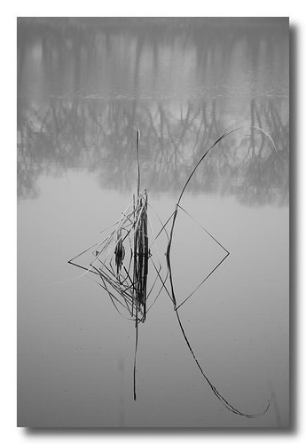 Foggy Backroads - Reflections by Alan Norsworthy