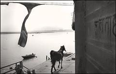 Langot | Varanasi (Arindam Thokder) Tags: india underwear varanasi langot
