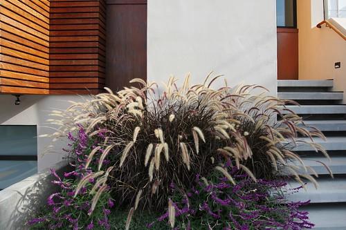 Plantburst