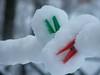 "neve italiana...........italian snow ("" paolo ammannati "") Tags: italy italia natura tuscany neve toscana inverno autunno viaggi verna casentino ghiaccio effettinaturali panoramafotográfico fotoconneve ringexcellence"