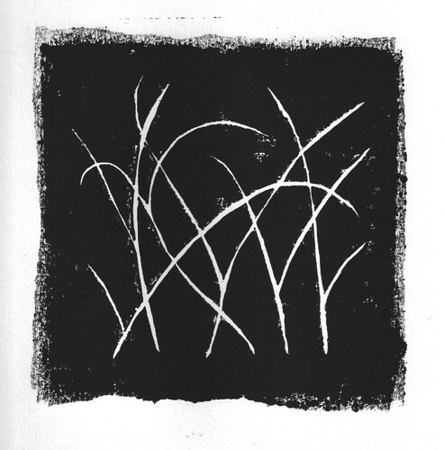 Reeds (on white)