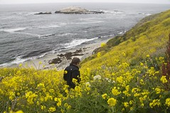 Flowers and more Flowers (gcquinn) Tags: ocean california from flower point view pacific you photos walk geoff or marin harold quinn everyone geoffrey peninsula reyes