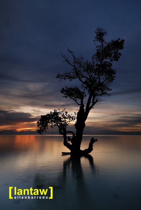 Maasim Sturdy Mangrove at Dawn