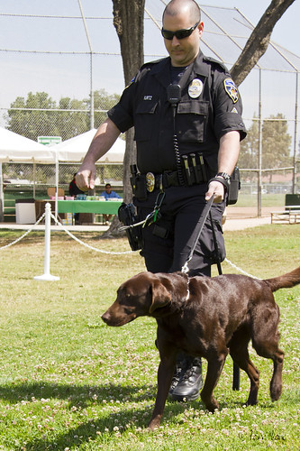 Duke K-9 with partner