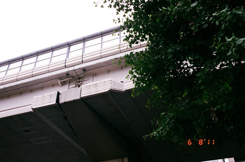 pigeonlove (9 of 13)
