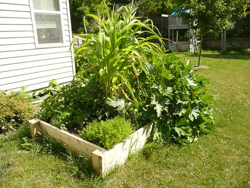 New Veggie Bed
