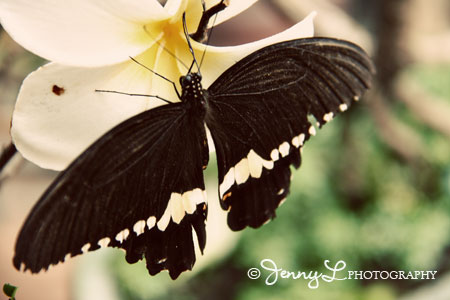 PROJECT 365: Butterfly Beauty
