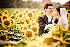 1 (nemeth_norbert) Tags: new wedding golden photo hungary foto photos style norbert american hungarian nemeth fotk n2photo