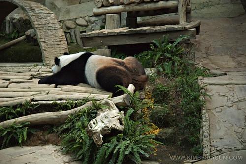 Pooping panda.