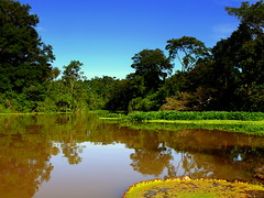 Inside The Amazon Rainforest (Butch Osborne) Tags: peru river amazon amazonia rio southamerica rioamazonas lillypad landscape jungle outdoors nature naturabeauty worldwidelandscapes bucketlist mustsee traveling travel overseasadventuretravel