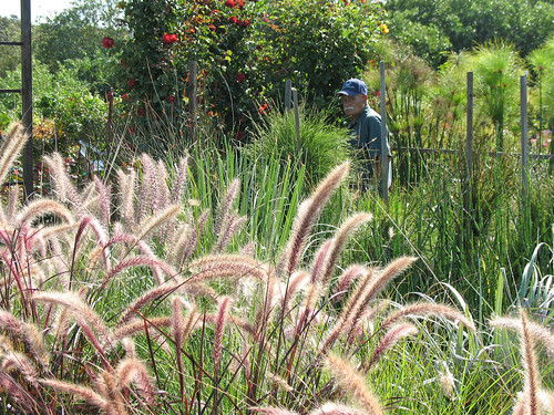grasses and papyrus