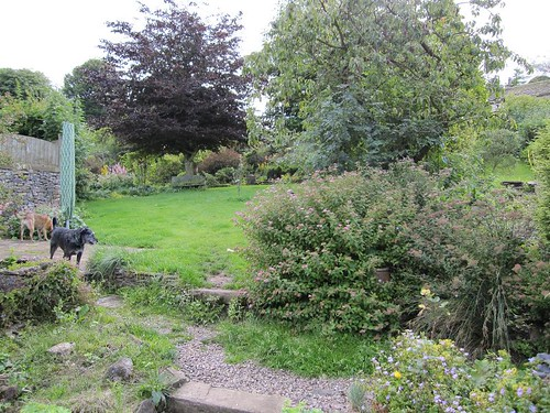 Dog friendly (and secure) garden at Welyarde holiday cottage