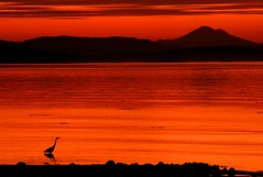 Sunrise Heron Silhouette (Brandon Godfrey) Tags: world pictures morning red summer orange usa canada heron water beautiful silhouette america sunrise wonderful landscape photography dawn photo amazing fantastic scenery rocks mt baker bc shot photos shots pics earth britishcolumbia sony united central picture silhouettes pic scene images victoria mount vancouverisland creativecommons pacificnorthwest northamerica states unreal alpha dslr washingtonstate incredible 2009 saanich outstanding ruleofthirds a300 islandviewbeach saanichton thechallengegame challengegamewinner ds