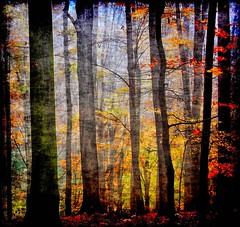 Come into my forest..... (Tobi_2008) Tags: autumn trees color nature colors beautiful forest germany deutschland saxony herbst natur harmony sachsen tobi wald farbe bume allemagne germania artisticphotography musictomyeyes aphoto thegoldengallery autumnfall creativephoto addictedtoflickr bej topseven fineartphotos diamondheart anawesomeshot superaplus aplusphoto flickrhearts thelieoftheland diamondclassphotographer flickrdiamond globalvillage2 kissedbylight heartawards diamondstars platinumheartaward threefaves shiningstar peaceawards arealgem stilllebendieharmoniederruhe spiritofphotography goldenheartaward hiddentreasurepost doubledragonawards naturescreations artofimages angelawards dragonflyawards thisshouldbeapostcard imagesforthelittleprince cafeelite multimegaship bestcapturesaoi magicunicornverybest magicunicornmasterpiece gabrigroupliberepolicromie vergesseneschaetzeforgottentreasures arteemisteronelloscattocreativo beautifulkunstkamera icolorideimieisogni kunstgriffskunstgriffe{myfavesoutstandinginvitedimages} lapetitegalerienopeople colordeepdarkrichvibrant brilliantphotographyaward3 coppercloudsilvernsun{admininviteonly} highqualitynaturevotetoday mygearandme