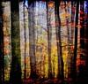 Come into my forest..... (Tobi_2008) Tags: autumn trees color nature colors beautiful forest germany deutschland saxony herbst natur harmony sachsen tobi wald farbe bäume allemagne germania artisticphotography musictomyeyes aphoto thegoldengallery autumnfall creativephoto addictedtoflickr bej topseven fineartphotos diamondheart anawesomeshot superaplus aplusphoto flickrhearts thelieoftheland diamondclassphotographer flickrdiamond globalvillage2 kissedbylight heartawards diamondstars platinumheartaward threefaves shining☆star peaceawards arealgem stilllebendieharmoniederruhe spiritofphotography goldenheartaward hiddentreasurepost doubledragonawards naturescreations artofimages angelawards dragonflyawards thisshouldbeapostcard imagesforthelittleprince cafeelite multimegaship bestcapturesaoi magicunicornverybest magicunicornmasterpiece gabrigroupliberepolicromie vergesseneschaetzeforgottentreasures arteemisteronelloscattocreativo beautifulkunstkamera icolorideimieisogni kunstgriffskunstgriffe{myfavesoutstandinginvitedimages} lapetitegalerienopeople colordeepdarkrichvibrant ☆brilliantphotographyaward3☆ coppercloudsilvernsun{admininviteonly} highqualitynaturevotetoday mygearandme