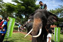 End Chang(e) Caravan สิ้นสุดคาราวานช้าง