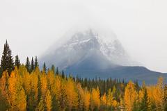 Jasper - 2009 (Jesse Estes) Tags: canada fall jasper aspens jesseestesphotography