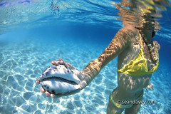 under water view of girl holding courie shell at Keiki, north sh (Sean Davey Photography) Tags: blue color green horizontal clarity clean clear dreamy seethrough aquatic transparent lucid crystalclear translucence lucidity seandavey finephotographyart photographersfineart underwatergirlcourieshellkeikinorthshoreuwbikiniclearbluemrmodelreleased