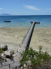 Snorkelling at Menjangan island, 71/365