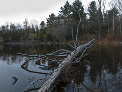 20091023-_IGP1674 (matthew prise) Tags: fall water deadtree sangervillemaine