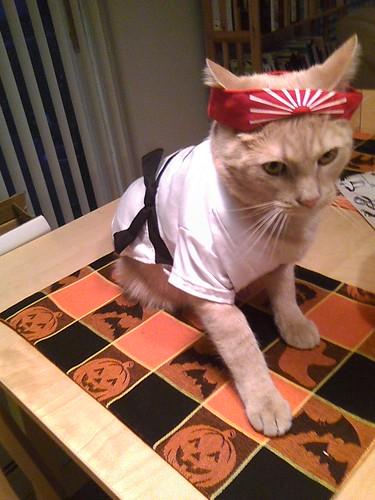 Ninja Kat