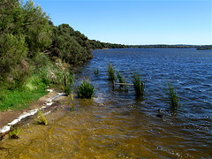 Lake Joondalup. Perth, Western Australia (Michi C) Tags: lighting food flower macro nature birds architecture dinner buildings reflections spiders web insects delicious friedrice joondalup lakejoondalup a590is neilhawkinspark