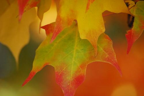 Boston Fall Colours