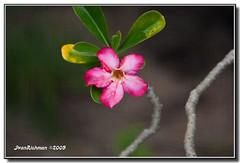 Imperfection_2620 (ivan_richman) Tags: flower 5d supershot perfectpetals ef28300mmf3556lisusm 5dm2 canon5dmarkii ivanrichman