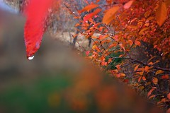 (Reza-ir) Tags: autumn tree nature iran پاييز khorasan ايران درخت طبيعت خراسانرضوي fariman فريمان عكسروز
