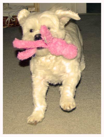 Dory-Stuffies