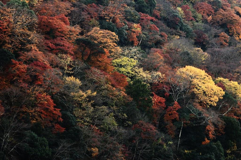 嵐山 #2
