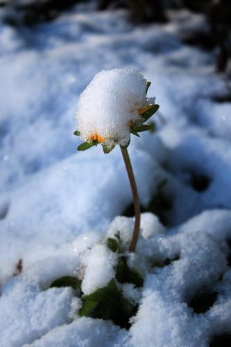 snow- 006x