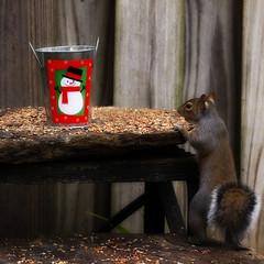 (Martha Catherine Ivey) Tags: christmas yard bucket snowman squirrel squirrels gettyholidays2010