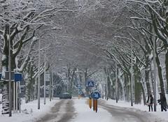 Insulindeweg in de sneeuw (Gerard Stolk (vers le Carme)) Tags: sneeuw delft insulindeweg