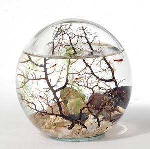 ecosfera1