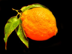 pomeran (Hana_boema) Tags: orange redorange arancione arancia pomeranc pomeran hanaboema