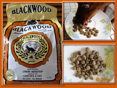 Maxi just loves Blackwood 3000 petfood