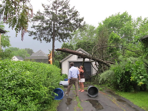 tree still fallen down