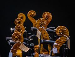 musica in vetrina (adrianotodesco) Tags: violoncelli celli cello strings woods legno music msica musica cremona italia italy colours colori colore
